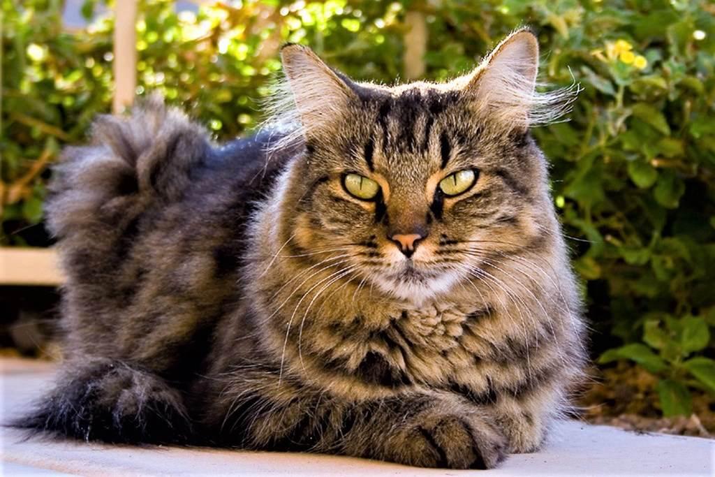 Kidney Disease In Cats Feline Renal Failure The Vet Is In