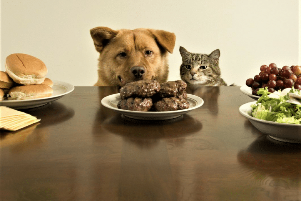 An Analysis of Today's Pet Food