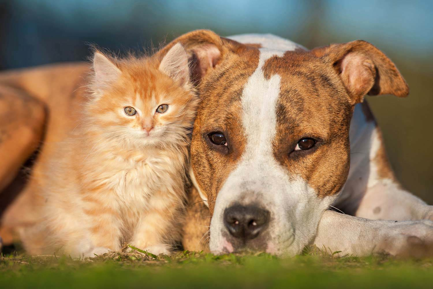 7 Greatest Threats to Your Pet's Health