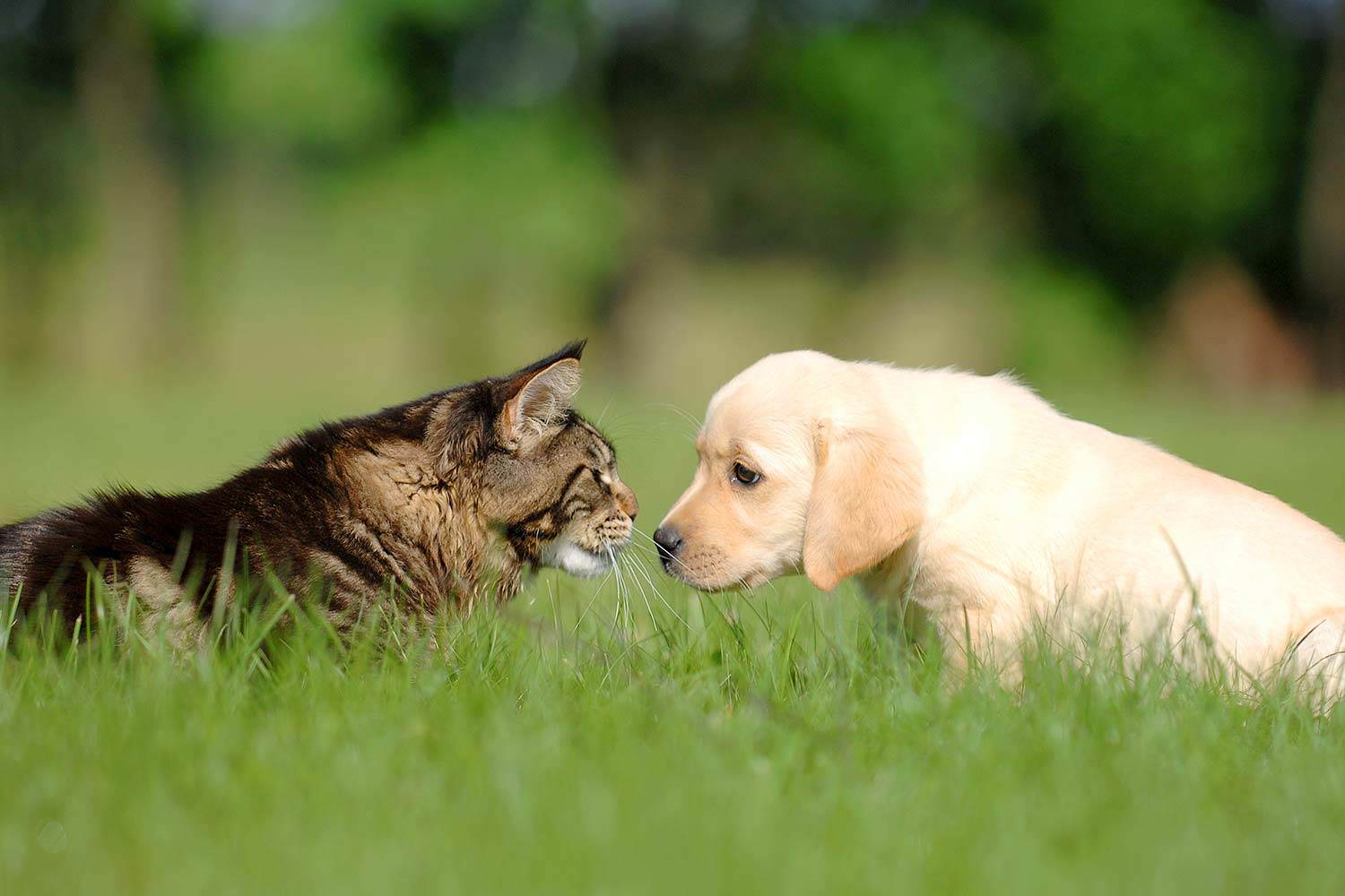 The Importance of Pet Vitamins and Supplements
