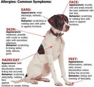 3. Dog Symptoms