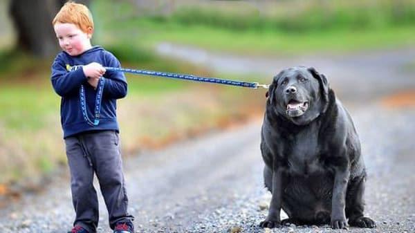 3. obese-dog