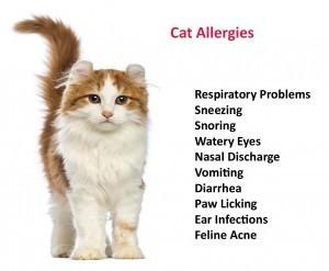 4. Cat Symptoms