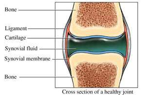3-synovial-joint