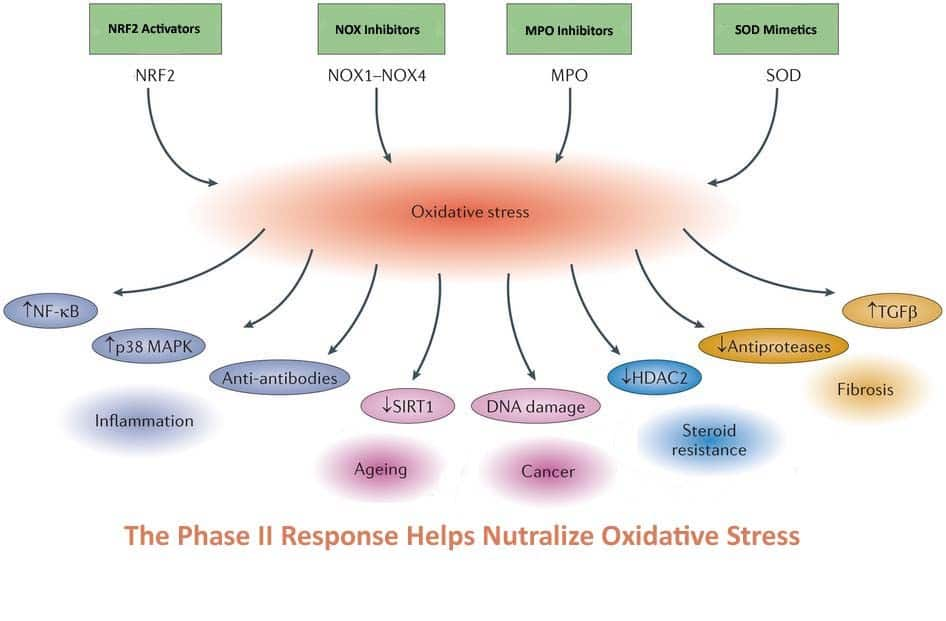 9-phase-ii-response - Pet Health