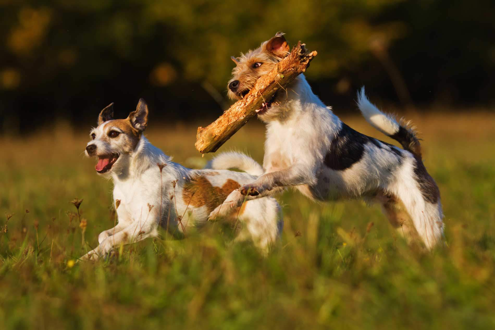 Signs of Heat Stroke in Dogs, and How To Help