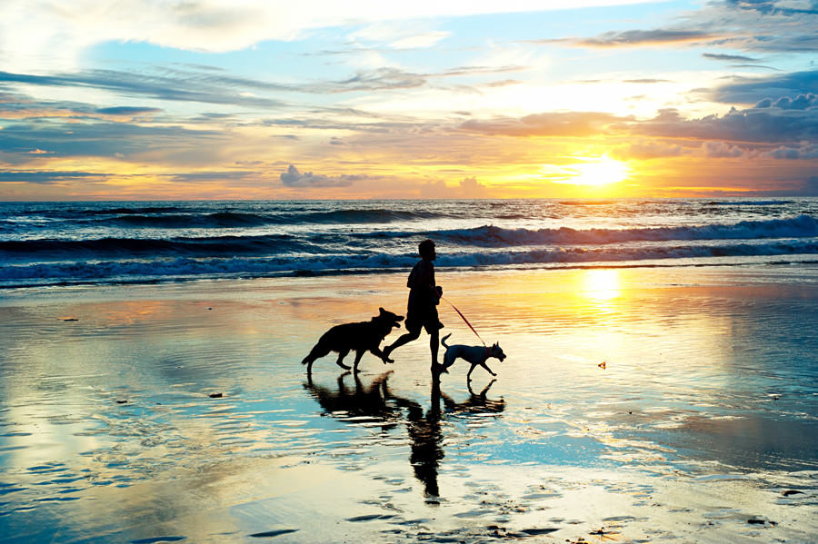 Dog and Human Running on the Beach
