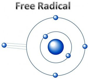 Free radicals are damaging to our pet's health
