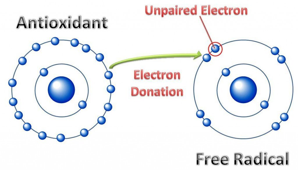 Antioxidants stabilize free radicals, preventing cell damage.