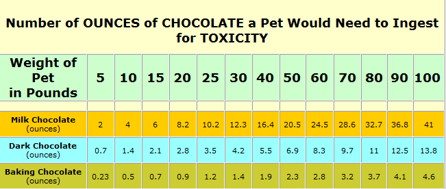 Image result for chocolate toxicity in dogs