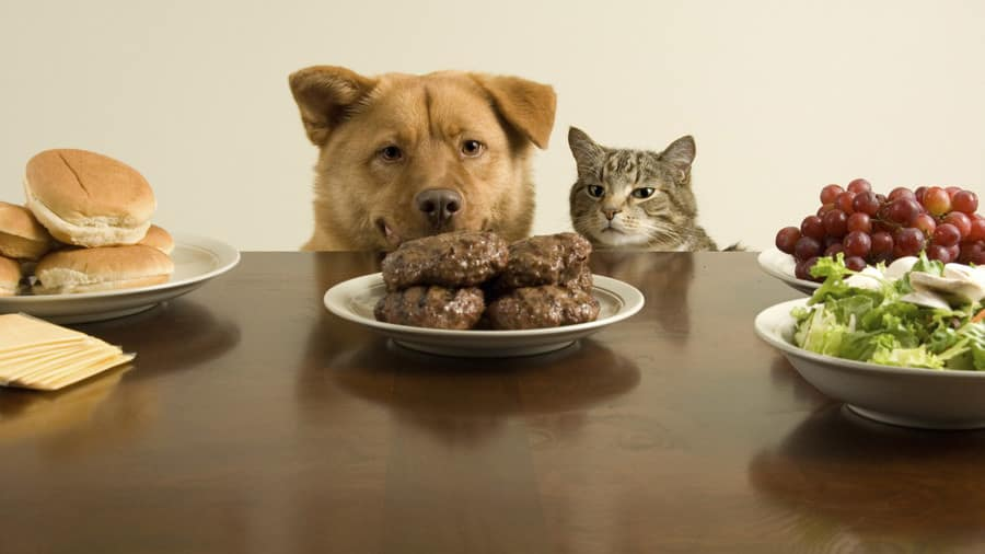 Dog and cat eating meat and vegetables