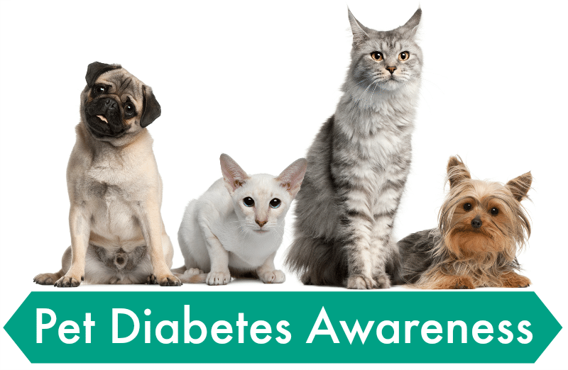 Diabetes in pets is a growing concern