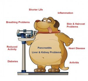 Obesity in pets can result in a myriad of health problems