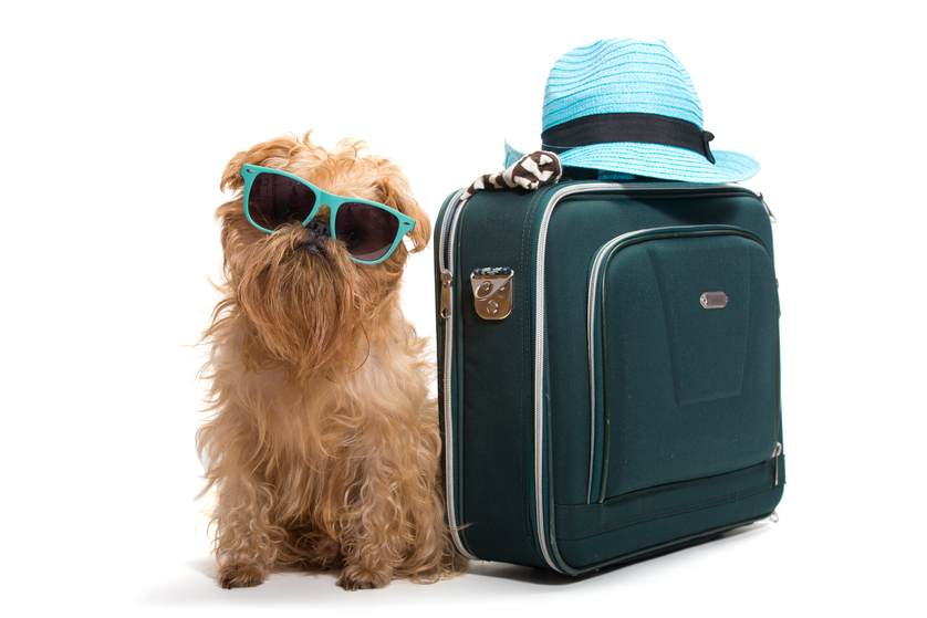Dog Car Safety & Other Canine Traveling Tips