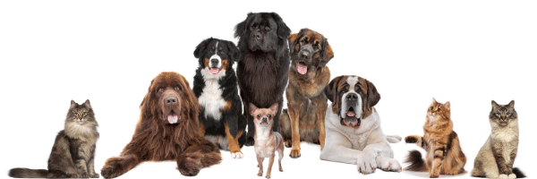 Cognitive Disease for Dogs