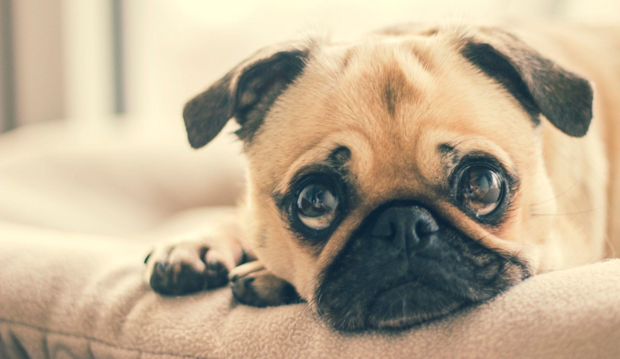 Canine Behavior Problems
