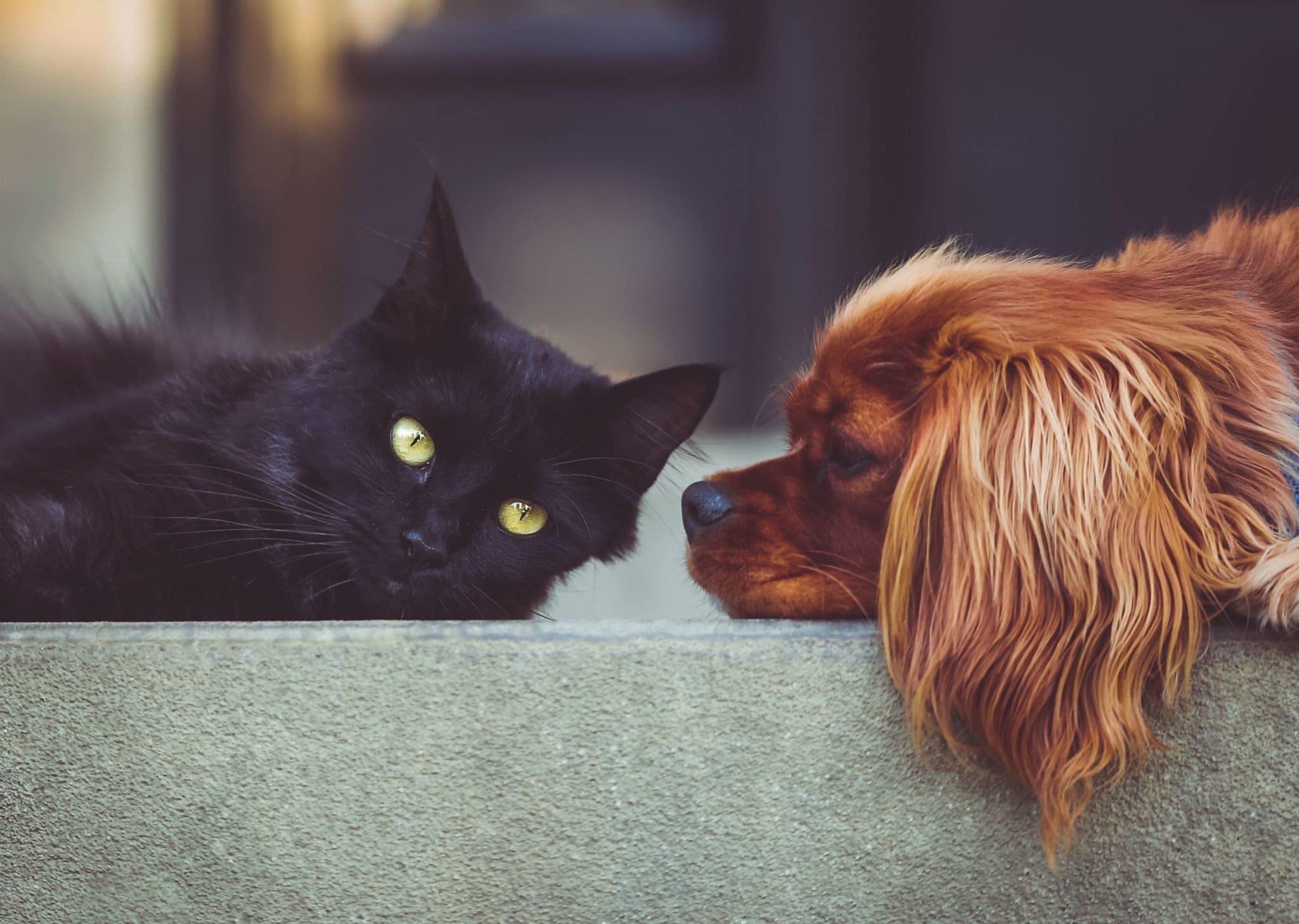 Dr. Bill's Recipe for Optimum Pet Nutrition