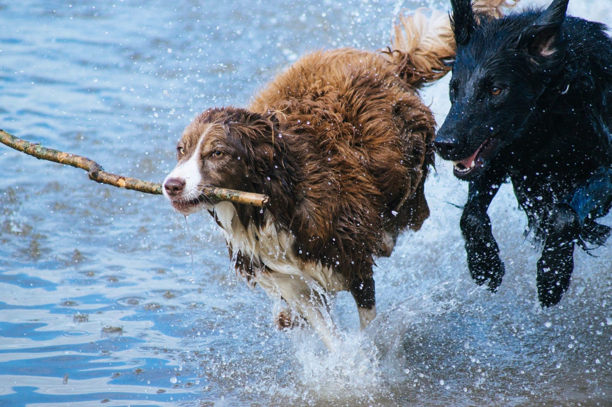 The Need for Joint Protection for Dogs
