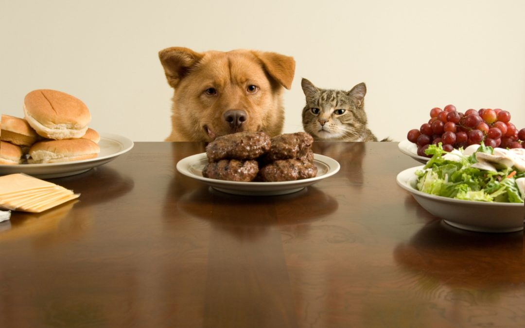 cat and dog at table with food