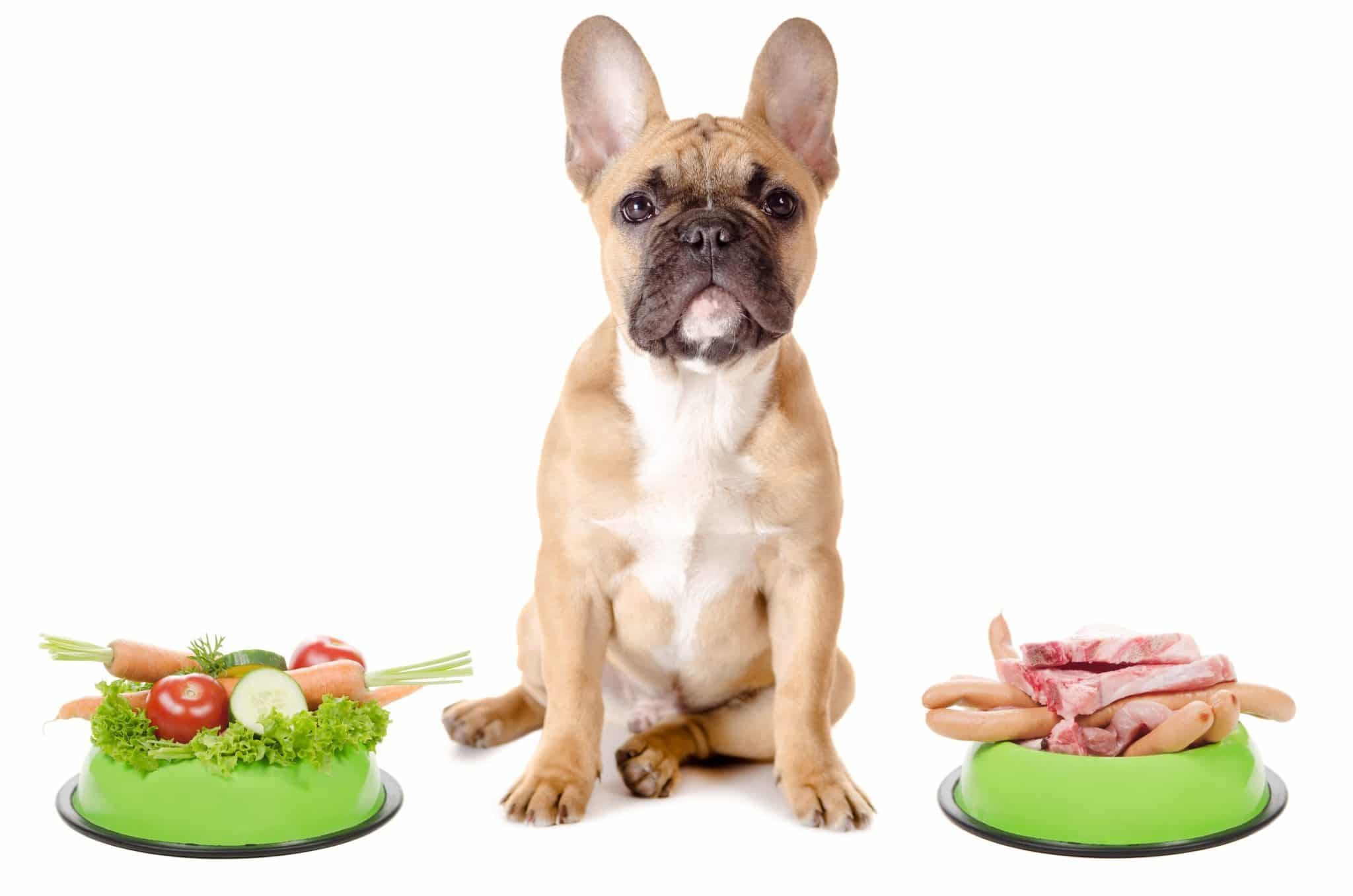 Biologically Appropriate Diets for Dogs and Cats