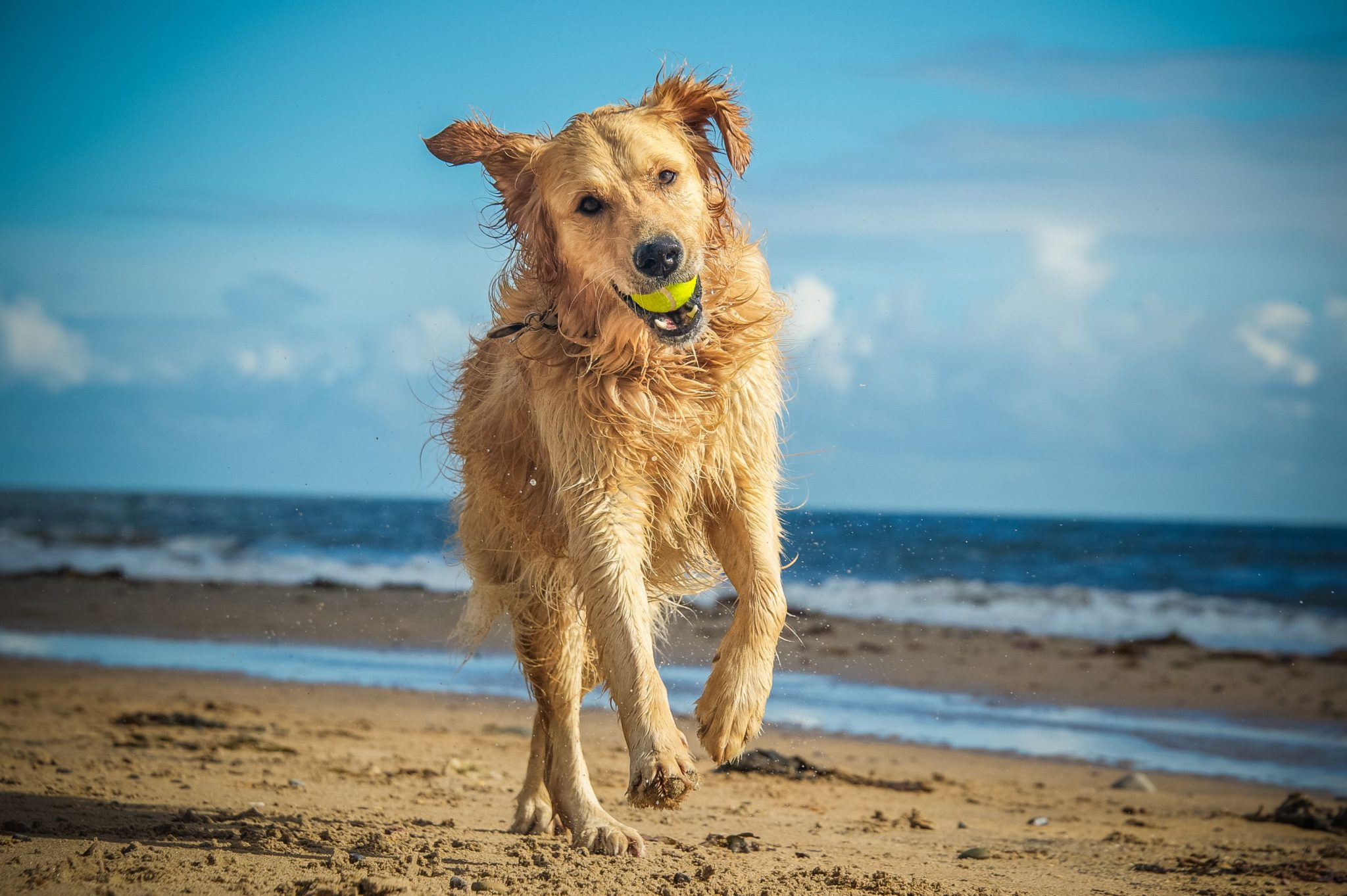 What is Canine Ultimate Fitness & Health?