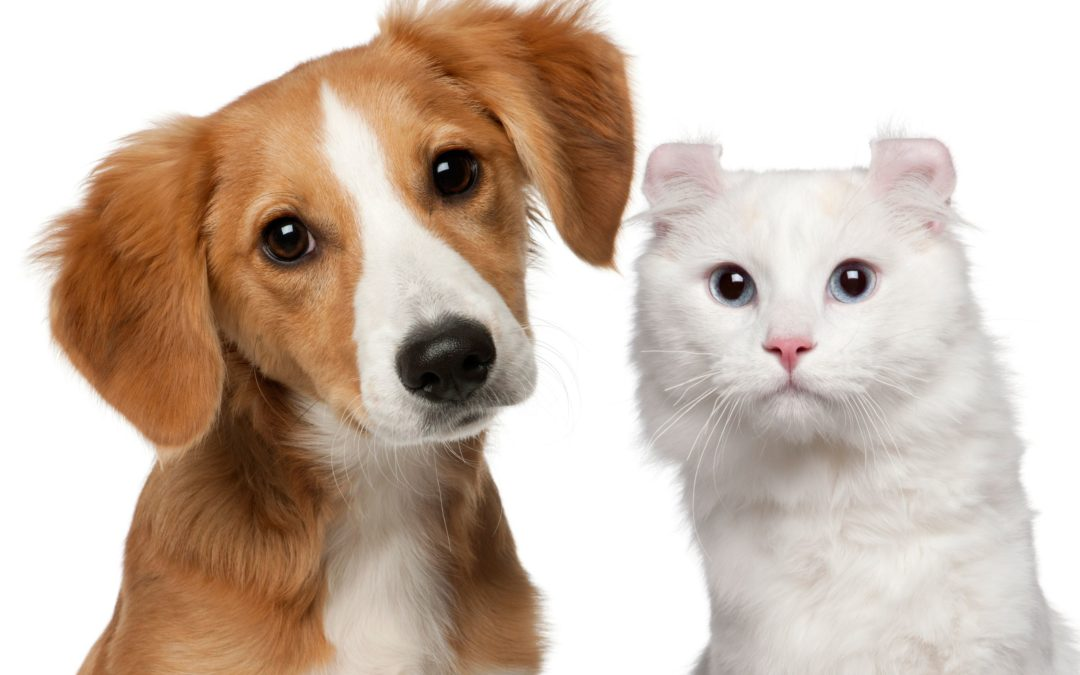 Pet Health – Be on the Defense