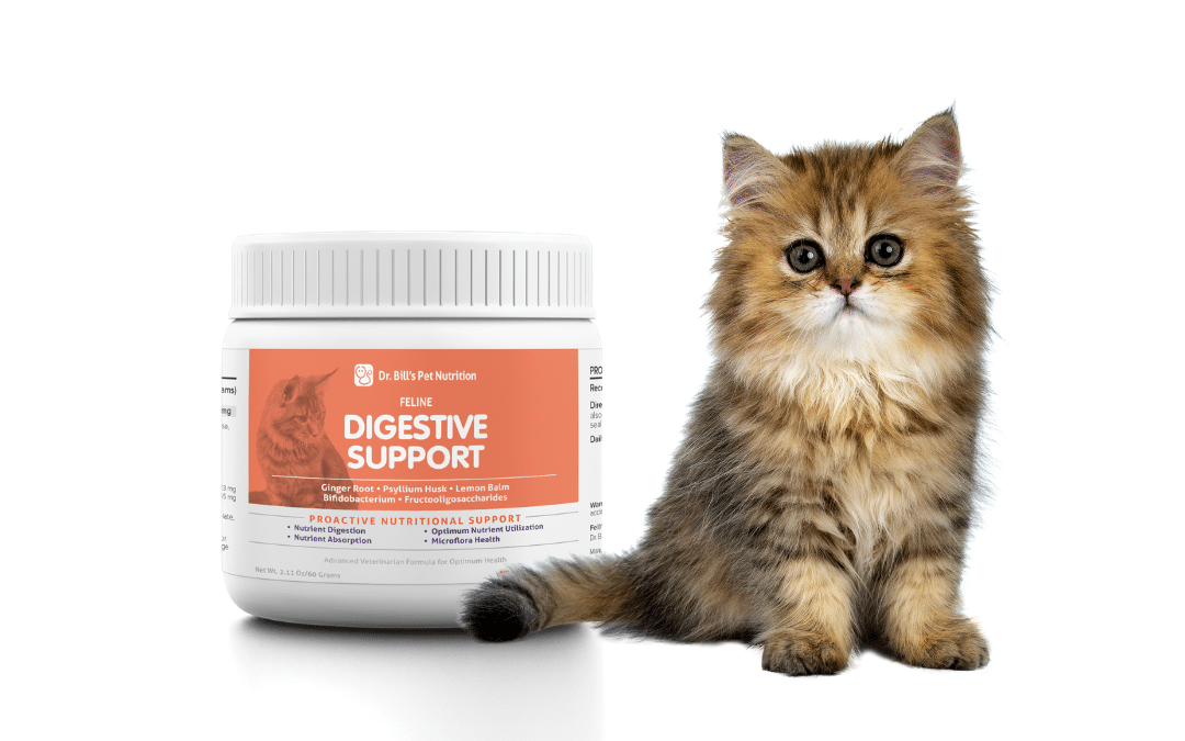 Best Digestive Support Supplement for Cats at Every Age